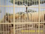 изкуствени скали за зоопаркове