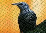 Защитна мрежа, предпазващи вишневи растения от птици