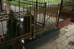 позлатена решетъчна кована ограда